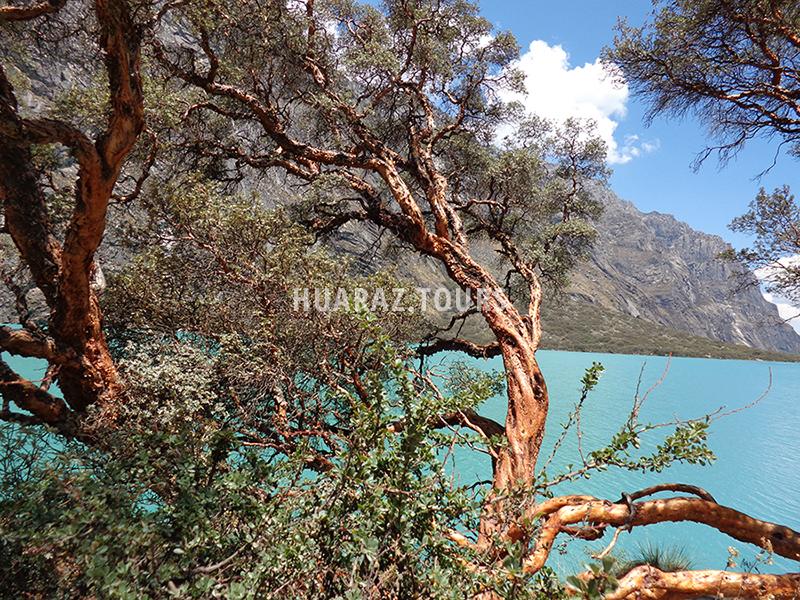 Laguna de Llanganuco Huaraz